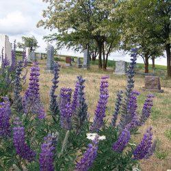Moro Cemetery, Moro, Oregon