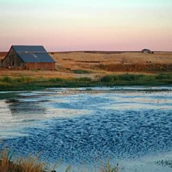 A pond and barn along Rutledge Road in the evening. Gary Halvorson, Oregon State Archives.
