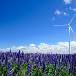 Wind turbines and lupine wildflowers along Monkland Lane. Gary Halvorson, Oregon State Archives